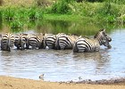Masai Mara and Rift Valley Lakes Safari 6 Days
