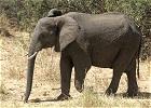 Masai Mara Lake Nakuru Samburu and Mt. Kenya Safari