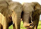 Elephant Research & Community Conservation Initiative