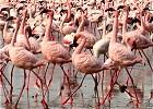 Flamingo and Wildebeest Migration Lodge Safari