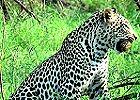 Luxury Kruger Park Safari