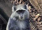 Udzungwa National Park Safari 3 Nights/2nights