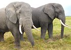 Kenya's Major Wildlife Safari 8 Days