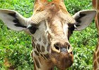 Kenya Wildlife Safari 7 Days