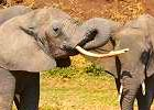 Fly-in Lodge Safari in Kenya: 8 days