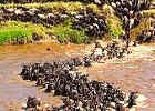 5 Days:  Serengeti Wildebeest Migration