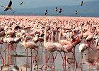 Full Day - Lake Nakuru Safari