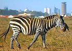 Half Day - Wildlife Experience Nairobi Nat Park