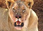 Tanzania, Southern Circuit Camping Safari