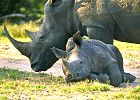 BIG 5 Safari (Exclusive Luxury & Malaria Free) & Cape Town COMBO deal.