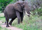 Southern Tanzania Safari Mikumi and Udzungwa