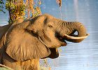 Malawi and Zambia safari -Scheduled Departure 2014