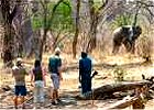 Zambia, Walking Luangwa Safari