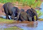 Okavango Wilderness Trail - Accommodated Small Group