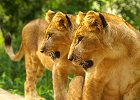 5 Days Kruger Park & Luxury Safari Lodge Combo