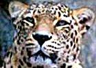 The Best of Northern Tanzania Safari 11days