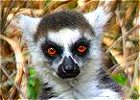Lemur Tour in Madagascar