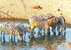 Botswana Safari  - Easy and Affordable