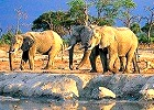 Botswana Luxury Lodge Safari