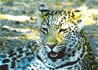Botswana Chobe National Park-Green Season Specials 2013/2014
