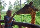 Karen Blixen Museum, Giraffe Manor & Elephant Orphanage