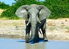 Botswana Chobe National Park Short Stay Safaris 2013