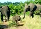 Botswana Chobe National Park Peak Season Special 2013