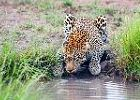 Authentic BIG5 Kruger Park Safari - Classic African Safari Camp