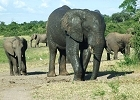 Botswana Safari - Pay 3 nights Stay 4