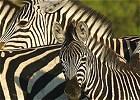 Botswana - Green Season Special