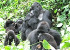 9 Day Mountain Gorilla Express
