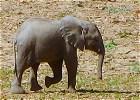 Zambia : Luangwa Valley Rest and Recuperation Safari