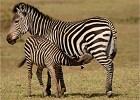 Wild Zambia Camping Safari