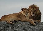 Budget Accommodated - Southern Safari