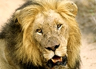 Cape Town & Kruger Big 5 Safari Combo