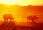 Botswana Wildside