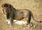 Best of Kenya - Lodge Safari
