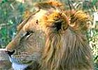 Tanzania - Ngorongoro Crater Lodge Safari