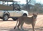 Classic Kruger National Park Safari