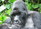 14 Day Gorillas & Game Parks