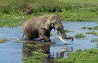 Tanzania Safari:  Serengeti, Ngorongoro & Zanzibar