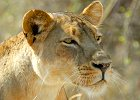 Zambia Luangwa Valley Safari