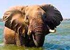 Botswana Classic Mobile Safari