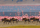 Nature Safari -3 Days, 2 Nights Safari in Tanzania
