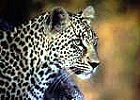 Great Tour - 5 days, 4 nights Safari in Tanzania