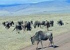 6 day Fun Safari in Tanzania's Northern Parks