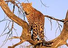 KwaZulu-Natal Top 5 Game Reserves Lodge Safari