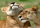 7 Day Kenya Safari Catch the Big 5