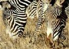 6 Days: Discover Tanzania Safari