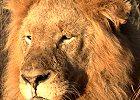 Circle of Life - Wildlife Safari